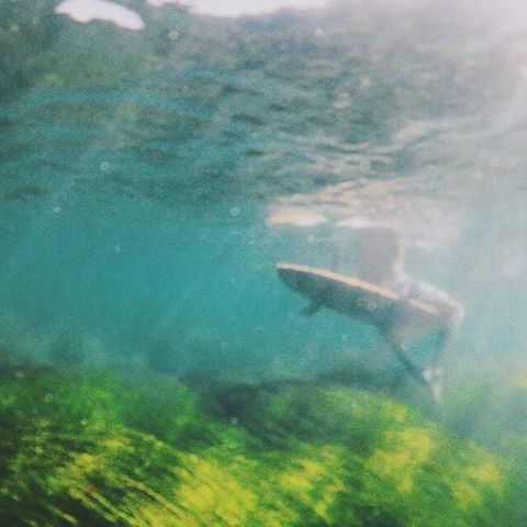 UNDER THE SEA // @avabivins #luvsurfgirl #luvsurf #perspective #surf #underwater #views