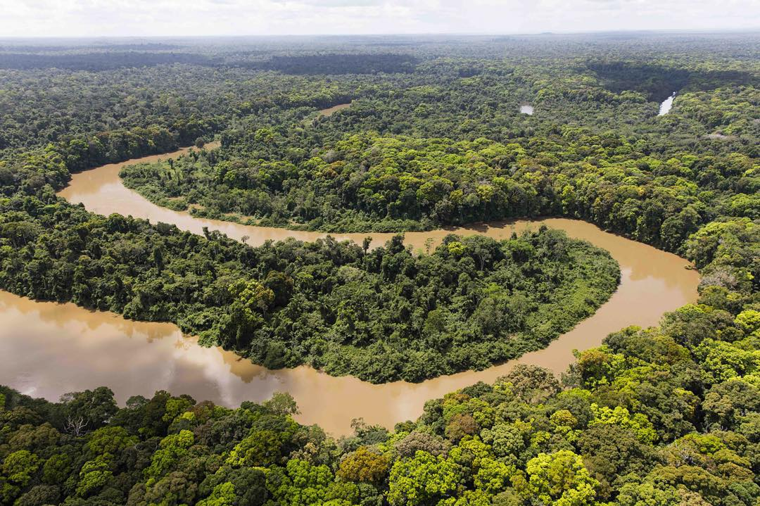 The Rewa River drainage is a biodiversity hotspot and home to some of the world's largest animals including giant amazon river turtle, giant river otter and harpy eagle.  While studying the migration patterns of arapaima, one of the largest freshwater...