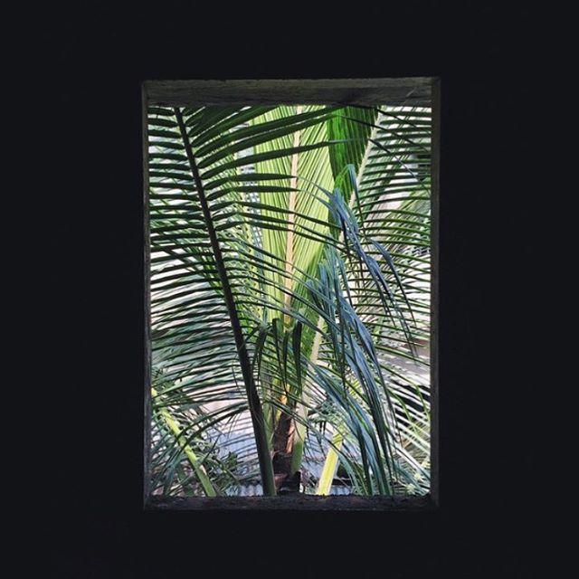 coconut windows ::