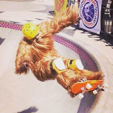 Anda sacandote la piel de Chewbacca que de a poco va apareciendo el calor!!!