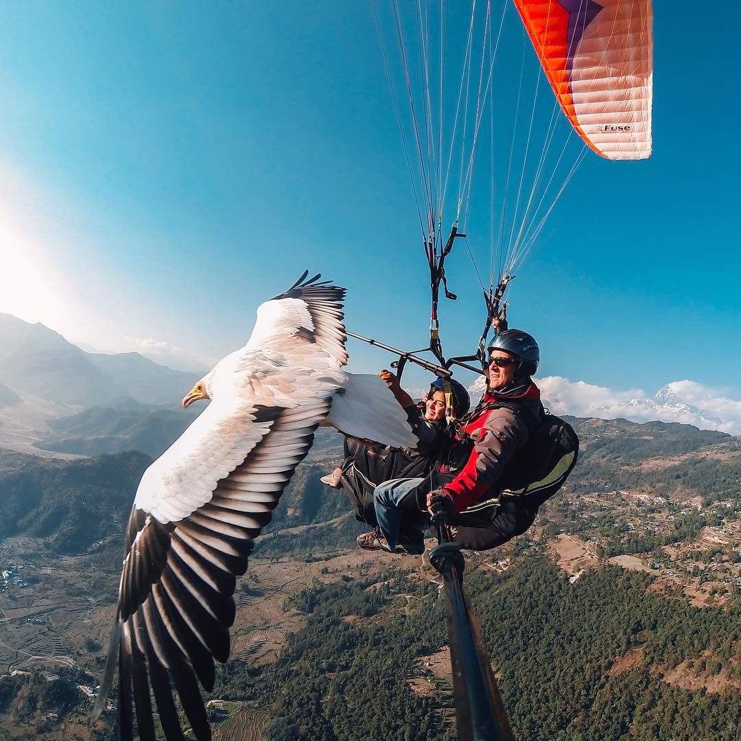 Photo of the Day! Scott Mason and Sofia Thapa of @Parahawking glide over Nepal with a beautiful bird of prey. They offer the unbelievable experience of flying alongside the hawks and interacting with them in their own environment. Share your most...