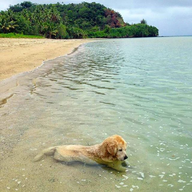 Sometime you just need a niiiiiice fluffy soak #luvsurf #dogsofinstagram #goldenlove #beach #fluffy #puppy