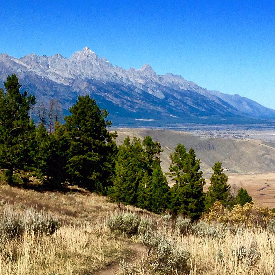We're proud to announce that we've won the @shift_jh Nonprofit Leadership Award, where ASC staffer Alex Hamilton represented us in Jackson, WY, among some of the biggest names in conservation. The #Tetons set a magnificent background for the festival.