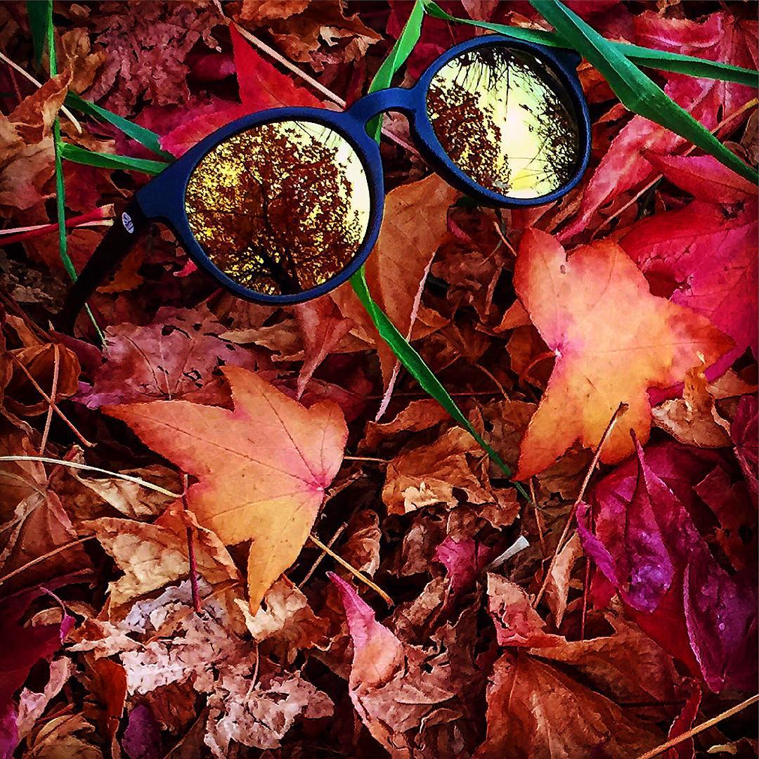 Black Gold Dipseas featuring fall foliage