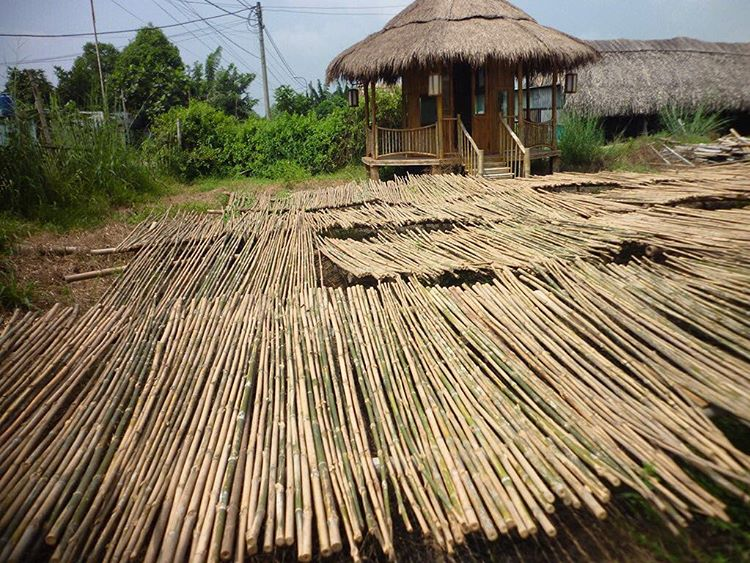 "Fresh ""RA"" boo drying under the Vietnamese Sun, headed our way in less than a month! (Fun Panda Fact: We call this bamboo type ""RA"", not only because it's raw, but also in honor of the Egyptian Sun God--RA...) #TribeUP fresh ""RA"" boo!  Photo: Tre..."