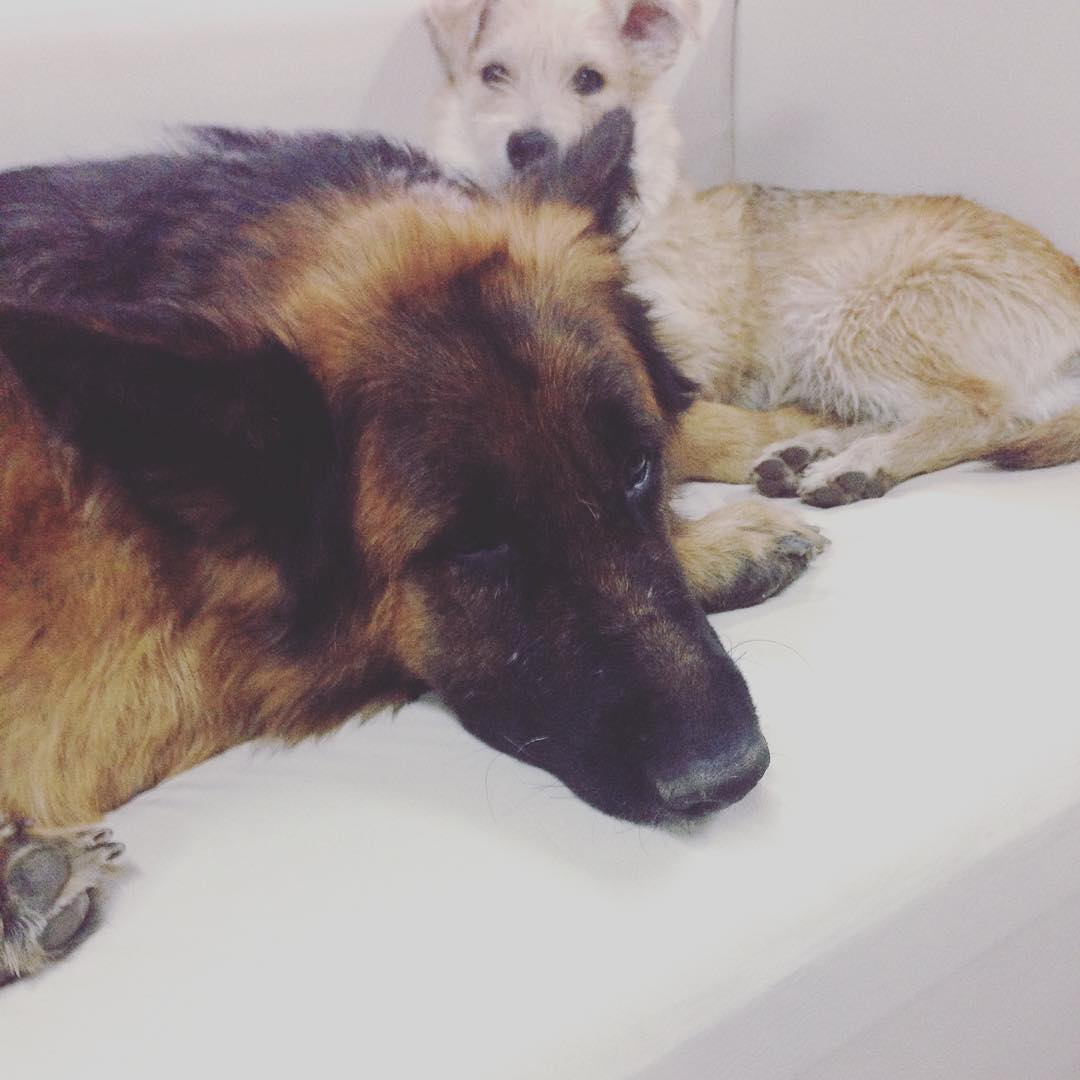 Amores perros ❤️
