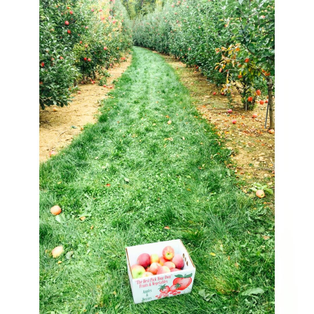 Apple pickin' season