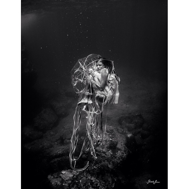 the jellyfish • #sarahleephoto #jellyfish @swellliving