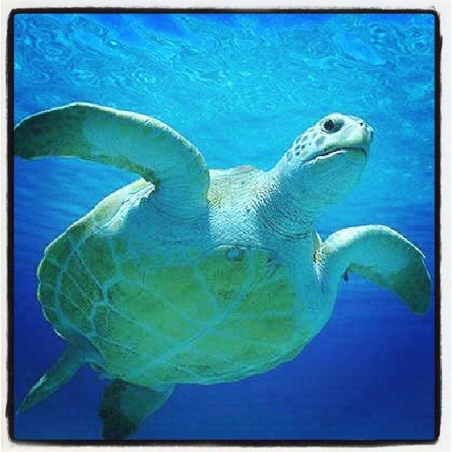 #chilimango #chili_mango #Tortugas #turtles