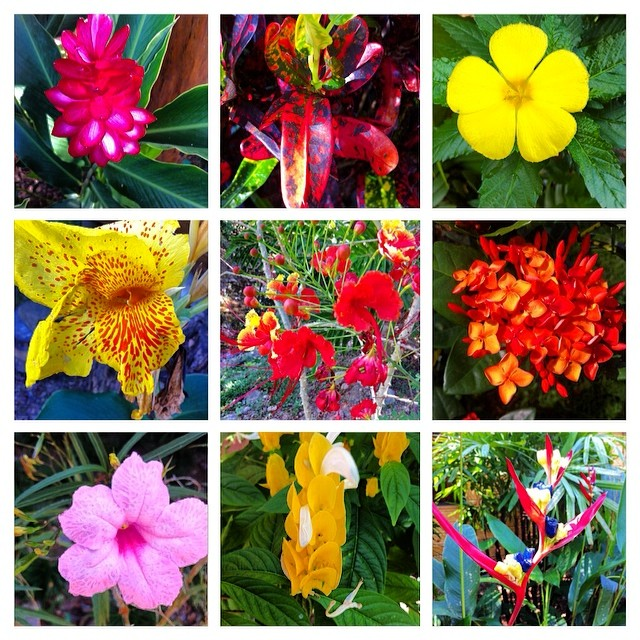 Some of the different plants and flowers that grow around the Bodhi Headquarters.