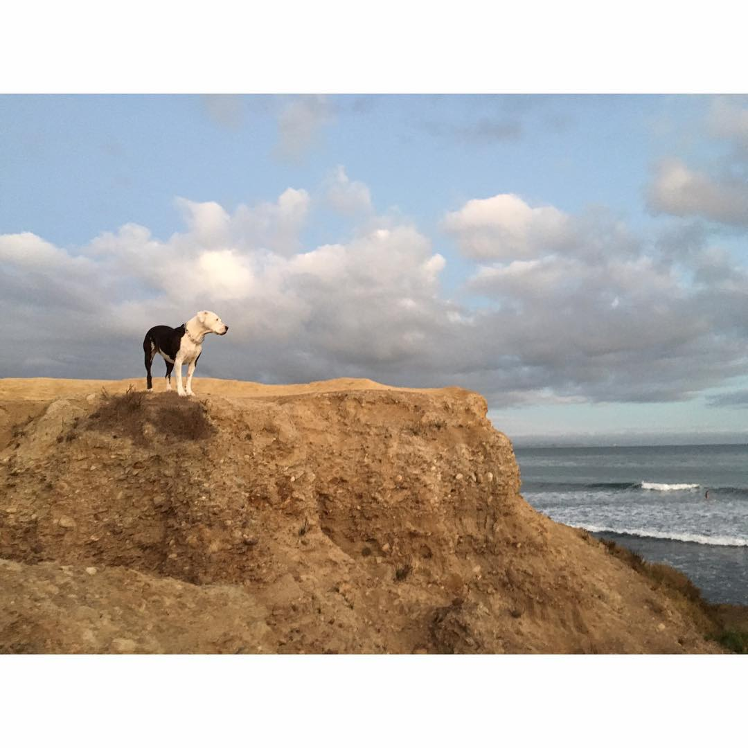 wave check #awesome #awesomesurfboards #santacruz #doglookout