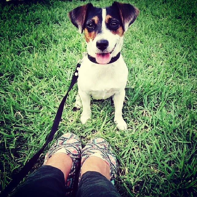 #PetLove  by @lauchi12 Paez Chakana #Paez #paezshoes #shoes #pet #jackrussell #dog #grass #smile