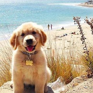 Dear Friends, I'm running away to California. Wish you were here! xoxo Ruff #luvsurf #runaway #california #westcoast #bestcoast #dogsofinstagram #home #repyourstate