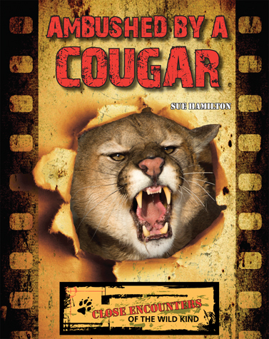 Ambushed by a Cougar