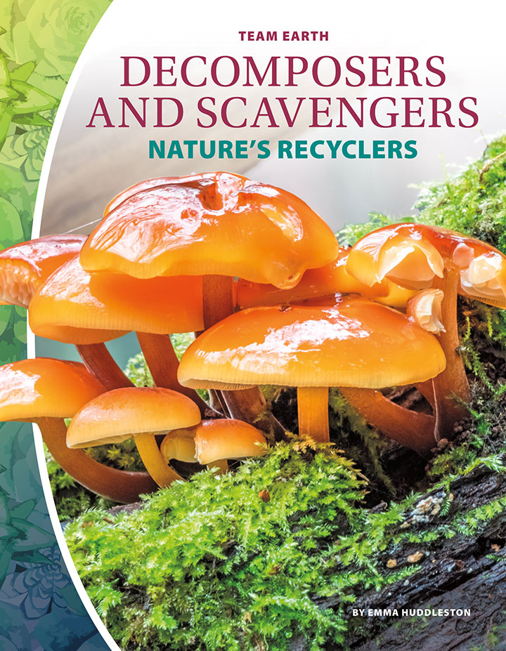 Decomposers and Scavengers: Nature's Recyclers