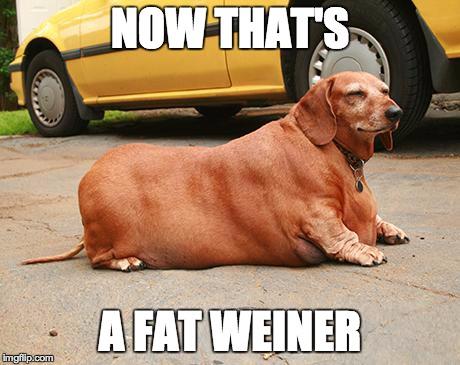 fat dachshund meme 7