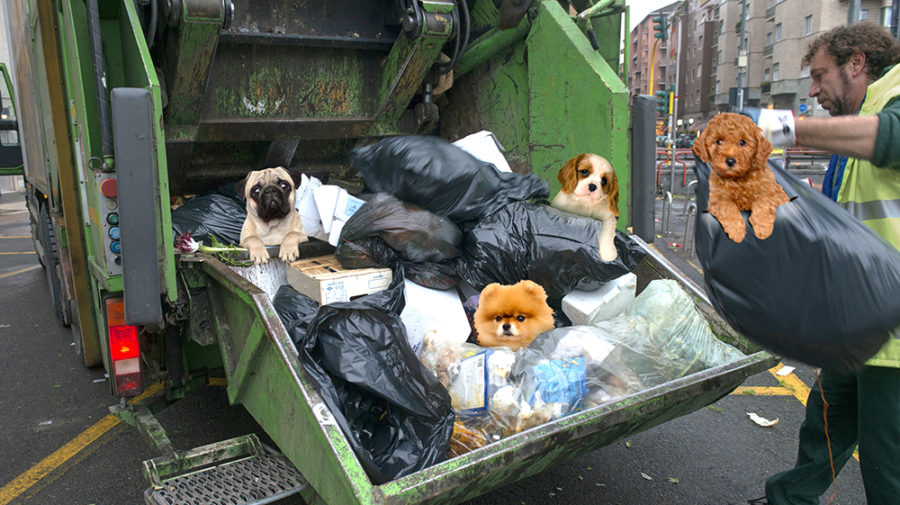How To Dispose of Your Puppies After National Puppy Day
