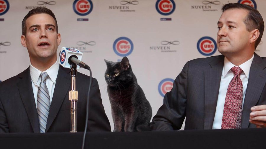 Black Cat Glares At Theo Epstein As He Signs Contract Extension