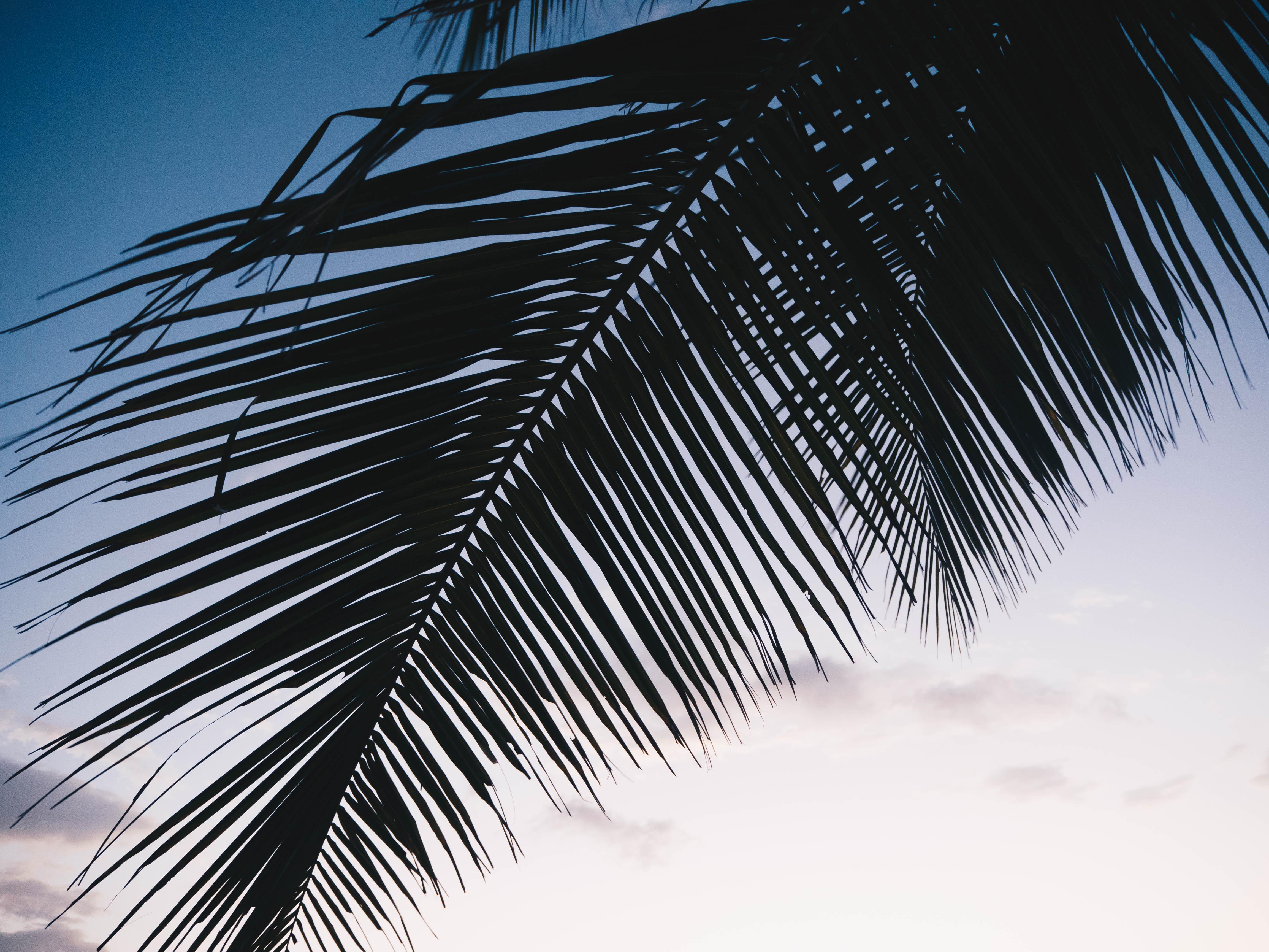 Image for blog article: Pure Bliss in Playa Popoyo- Le bonheur est a Playa Popoyo!