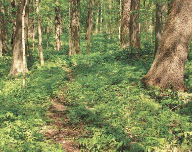 McNabb-Walter Nature Preserve