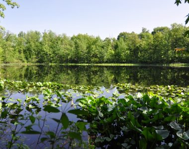 From much-anticipated preservation to recreation, Spring Lake Woods and Bog to open to public