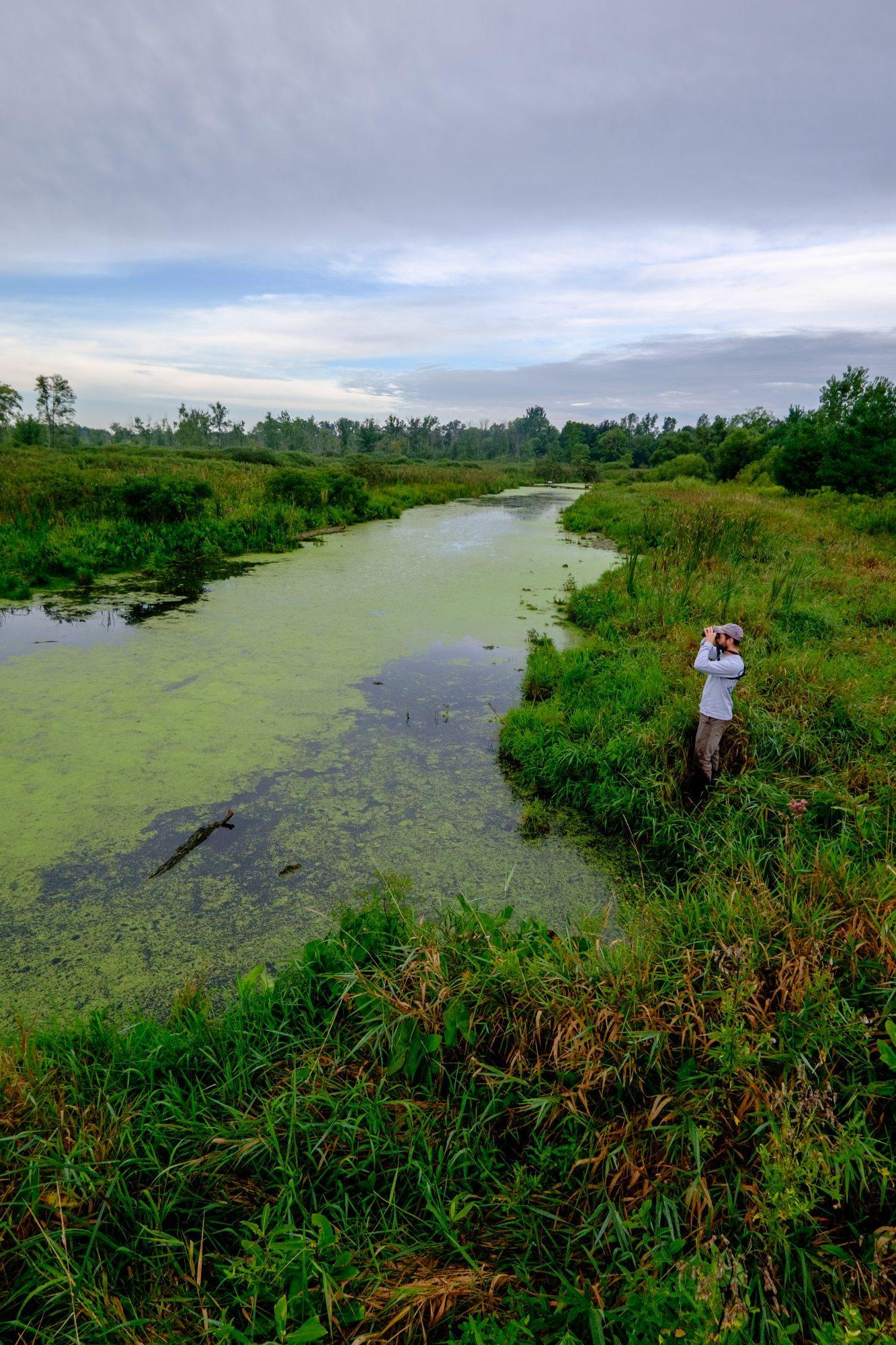Rare Bog Acquisition Expands Scenic Corridor In Lagrange