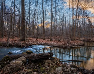 Kauffman Nature Sanctuary: ACRES First Michigan Property