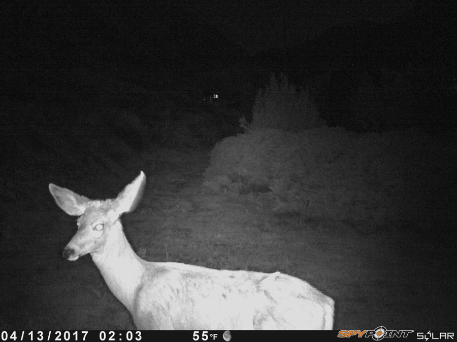 The Best Trail Cameras for 2018
