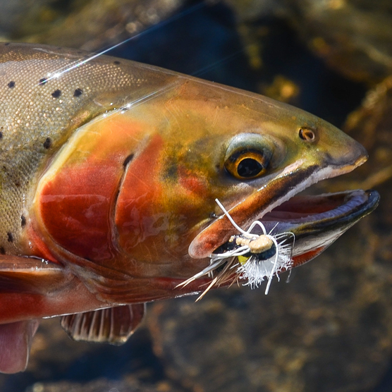 Fly Fishing With a Guidebook Author