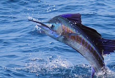 Product Sportfishing From Kewalo Basin