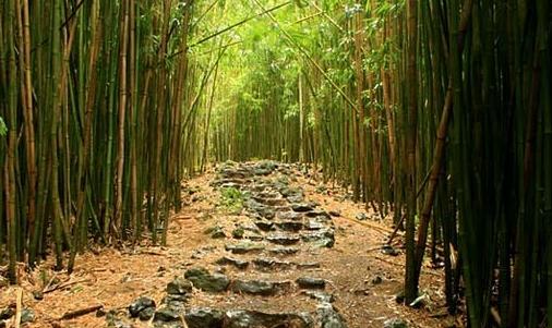 Product Full Day Hana Waterfall/Rainforest Hike
