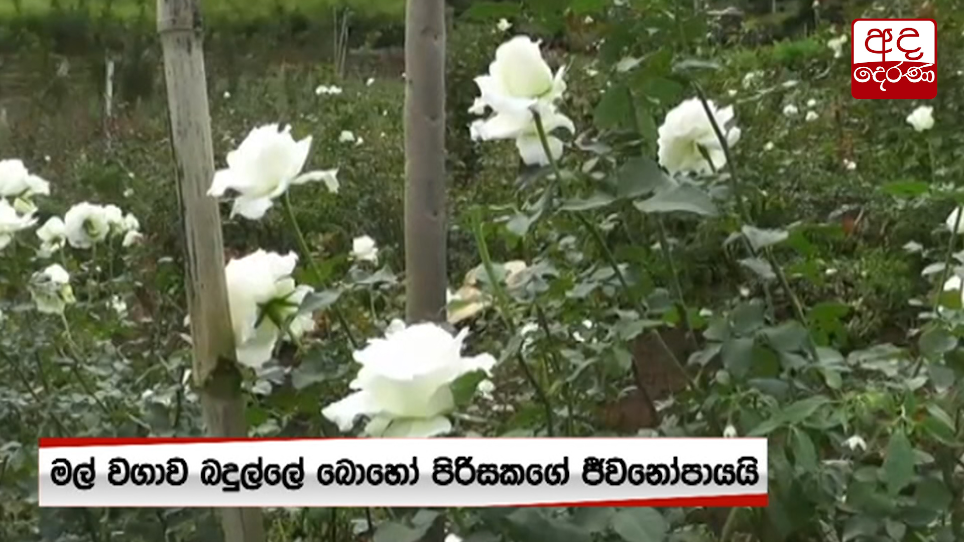 Flower growers affected by Covid-19 outbreak