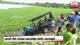 Safari jeep falls into Horuwila Wewa at Wilpattu National Park