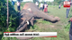 Wild elephant dies from electrocution