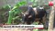 Illegal slaughterhouse in Balangoda raided