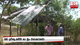Chena farmers afflicted without fertilizer for Maha Season
