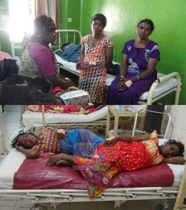 குளவி கொட்டுக்கு இலக்காகி 06 பெண்கள் வைத்தியசாலையில் அனுமதி