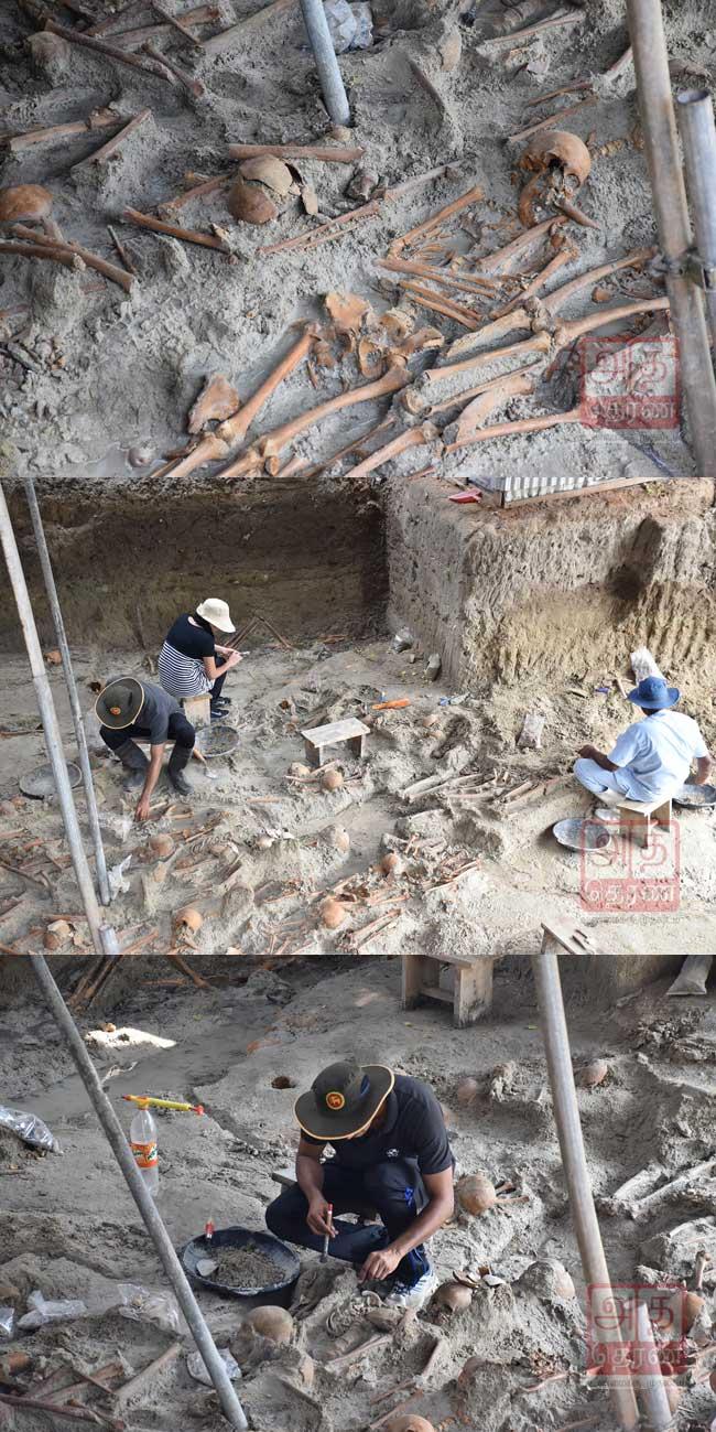 மனிதப் புதைகுழியில் இருந்து  239 மனித எலும்புக் கூடுகள் கண்டுபிடிப்பு