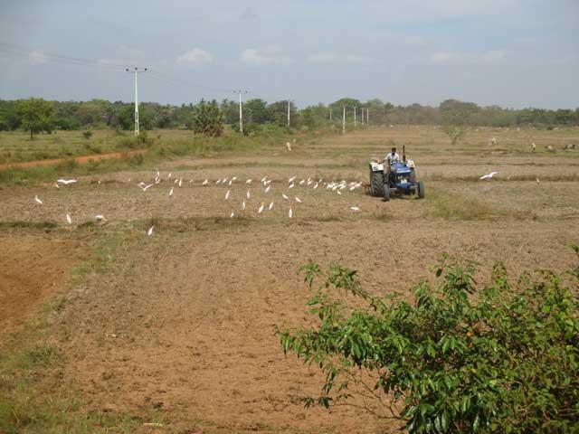 காலபோக  நெற்செய்கைக்கு ஆயத்தமாகும் கிளிநொச்சி விவசாயிகள்