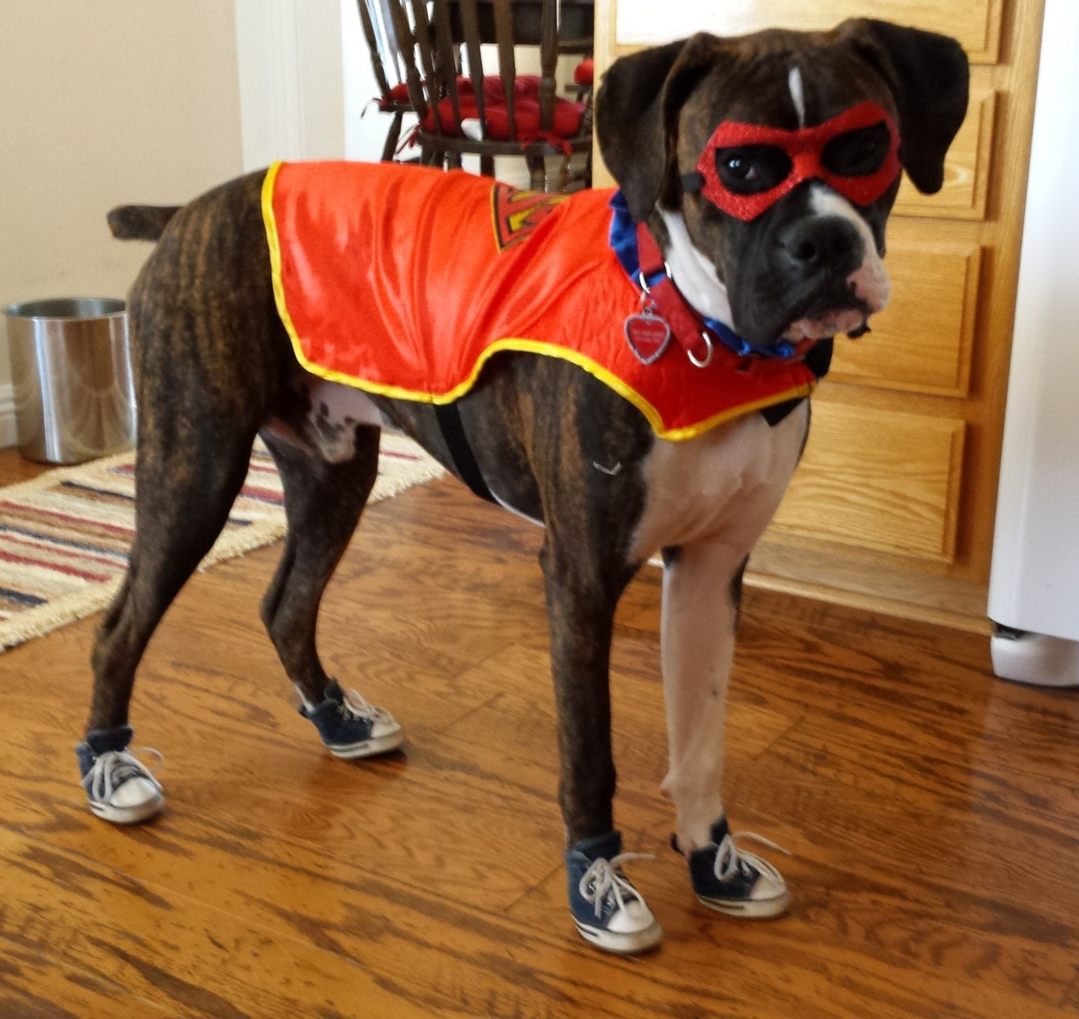 Boxer wearing sneakers and halloween costume