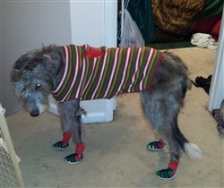 Irish Wolfhound Wearing Sandals
