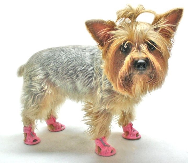 Dog Wearing Sandals in the heat