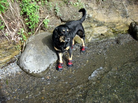 a dog is wearing booties at a lake