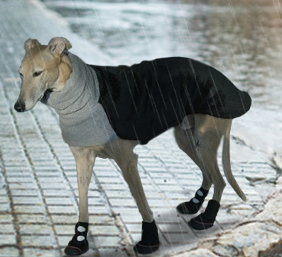 greyhound wearing a jacket and boots in the rain