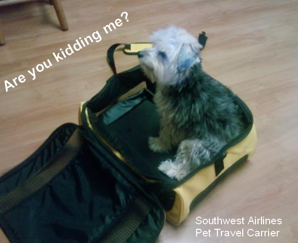Dog in Southwest Airlines Travel Case