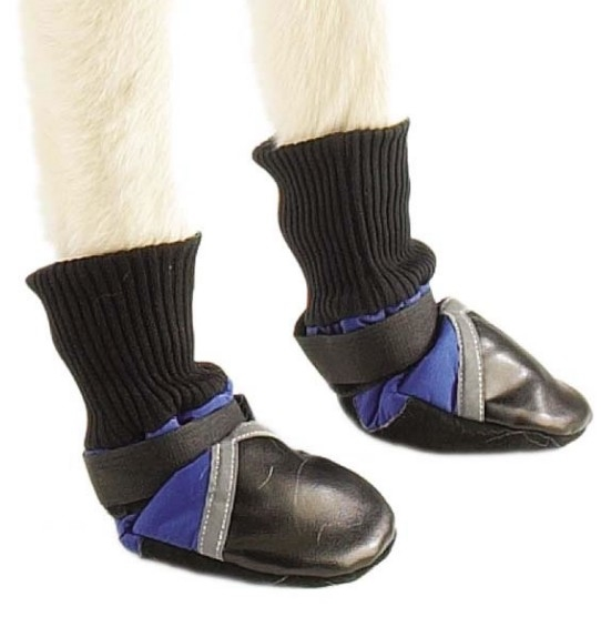 blue Guardian Gear dog boots