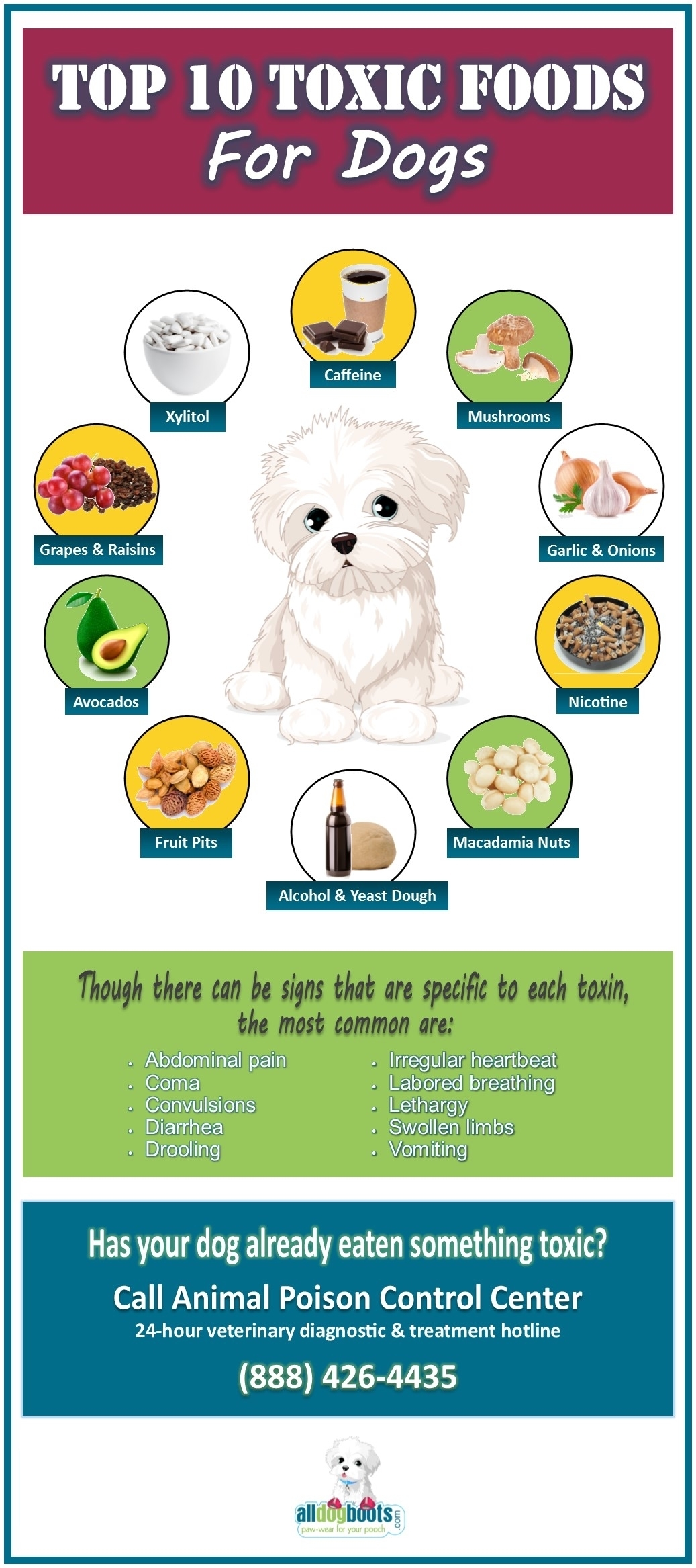 Foods That Are Toxic to Dogs Chart
