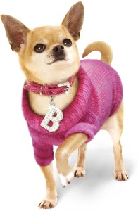 chihuahua wearing a pink sweater and necklace