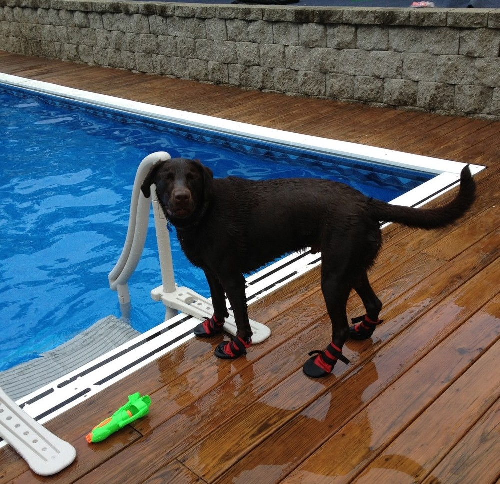 dog standing next to pool with boots on