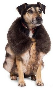 dog wearing a fur jacket